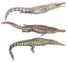 Machimosaurus (SciiFii)
