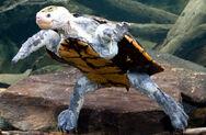 Animals-irwinsturtle-slide2-web