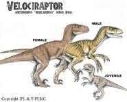 Nublar velociraptors