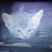 Kitten Bortz