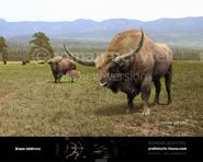 Bison-latifrons-2015a-738x591