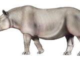 Subhyracodon (SciiFii)