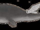 Marine Dylanus