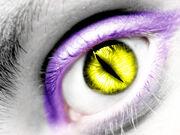 Darcia eyes
