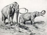 North American Elephant