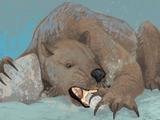 Bear Seal