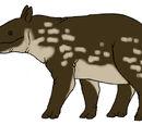 Madagascian Tapir