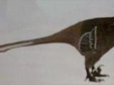 Black-Masked Wounder