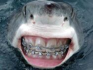 Funny-sharks-with-human-teeth-braces-pics-images-photos-15