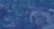 Black-hooded lemur