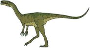 Coelophysis-Picture