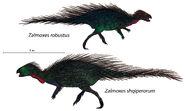 Zalmoxes dichotomy