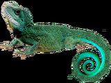 Bolivian Tree Lizard