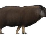 Woolly Tapir