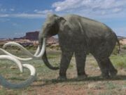 American Southern Mammoth