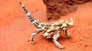 Thorny Lizard