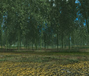 Th105BambooForest