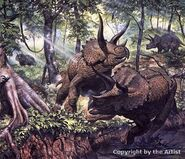 6 triceratops mark hallett