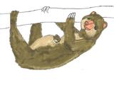 Marsupial Sloth