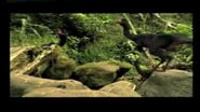 DwarfTroodon