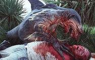 Hammerhead shark attack