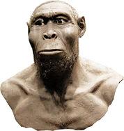 Homo rudolfensis2