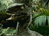 Montanoraptor