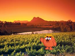 Копатыч в ЮАР