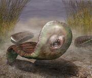 06.36B Odontogriphus-small