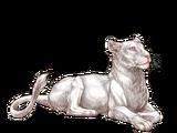 Mutacje koloru futra u lwów