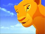 Lwy Słoneczne