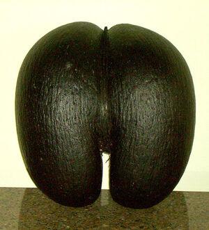 Female coco