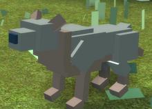 Ratdog