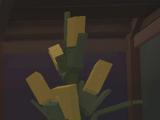 Giant's Corn (Plant)