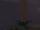 Mandrake (Plant)