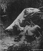 356px-Касаи рекс хрустит костями