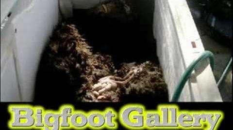 Bigfoot Proof, Real pictures-0