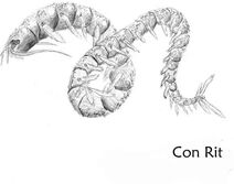 Con-rit-vietnam-cryptid-centipede-sea-monster3