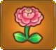 Marriage Rose