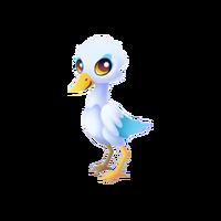 Snowy Egret Baby