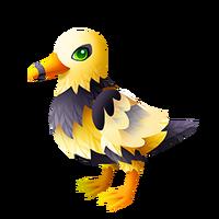 Beegull Adult