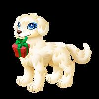 Present Puppy Adult