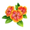 Riviera Flowers