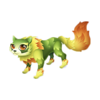Forest Cat Adult