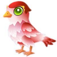 Cupid Sparrow Juvenile