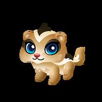 Chipskunk Baby