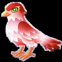 Cupid Sparrow Adult