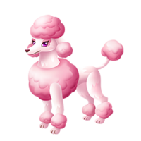 Fluffy Adult