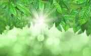 Groene-bladeren-bokeh-achtergrond 1048-2315