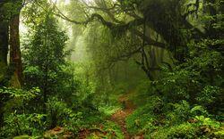Jungle-005